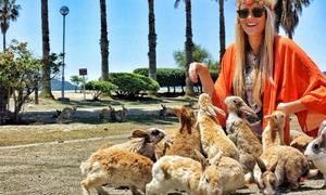 Tan chảy với 'vương quốc thỏ' siêu đáng yêu ở Nhật Bản