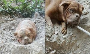 Cuộc giải cứu chú chó bị chôn sống