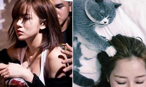 Sao Việt 24/8: Tú Linh lần đầu xăm mình, Chi Pu ngủ với mèo như chị em