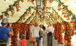 Hàng vạn bông hoa bằng giấy đẹp lung linh trên đường phố
