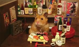 Quán bar sành điệu của chú chuột Hamster
