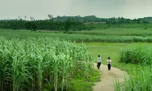 5 khác biệt giữa truyện và phim 'Tôi thấy hoa vàng trên cỏ xanh'