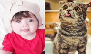 Loạt biểu cảm đáng yêu như mèo của con gái Elly Trần
