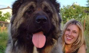 Sê-ri cún cưng khổng lồ khiến nhiều người khiếp vía