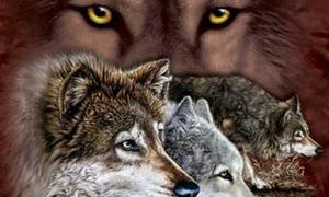 Đố vui: Có bao nhiêu chú sói xuất hiện trong hình?