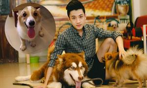 Đàn thú cưng mới của chủ quán 9x có 15 chú chó bị đầu độc