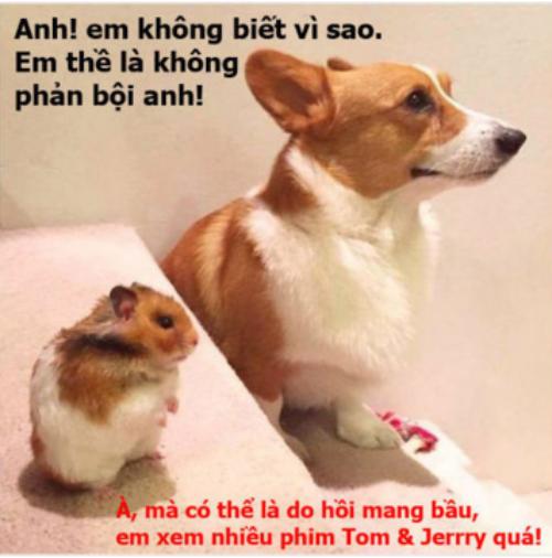 cuoi-te-ghe-5-12-em-the-khong-phan-boi-anh-ma-8
