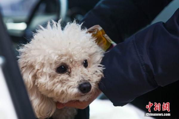 Tình trạng sức khỏe của chú cún hiện tại