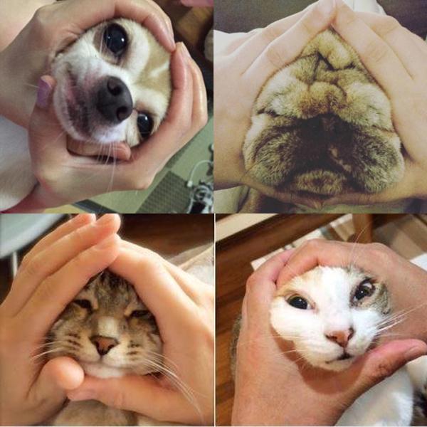 Một số người còn sáng tạo bằng cách làm mặt cơm nắm cho chính mình, bạn   bè hay thú cưng.