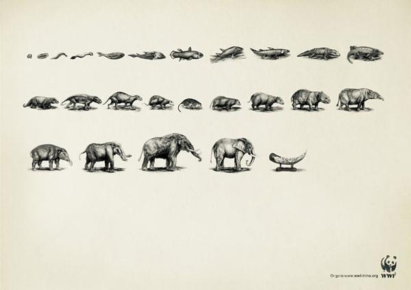 Tương tự, một chú voi rồi cũng sẽ kết thúc cuộc đời bằng cặp ngà.