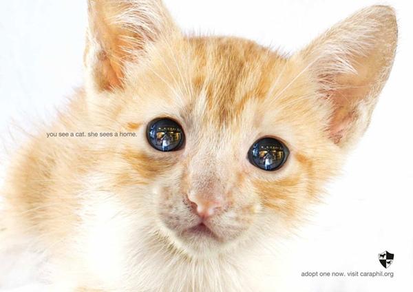 Và những chú mèo cũng đang trông ngóng tình thương từ con người.