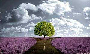 Con đường nói lên quan điểm của bạn về tình yêu