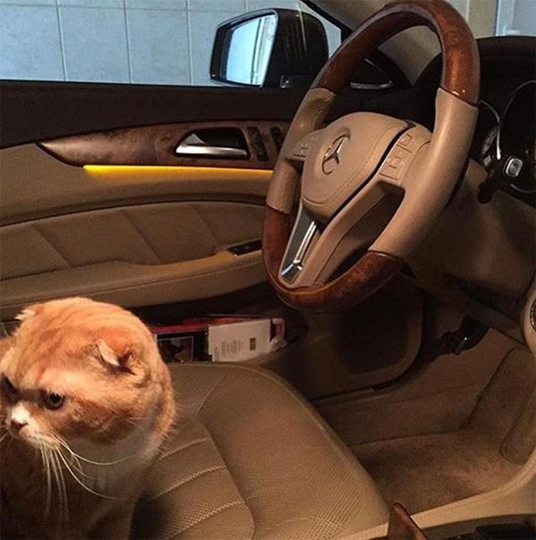Nội thất sang trọng trên xe hơi và những chú thú cưng đắt đỏ là hai niềm đam mê lớn của các thành viên Rich kids in Russia.