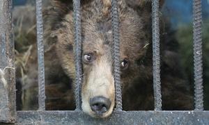 Những con vật tội nghiệp trong sở thú tệ nhất thế giới
