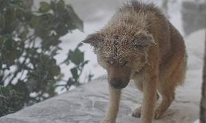 Chú chó co ro trong mưa tuyết âm độ ở Mẫu Sơn