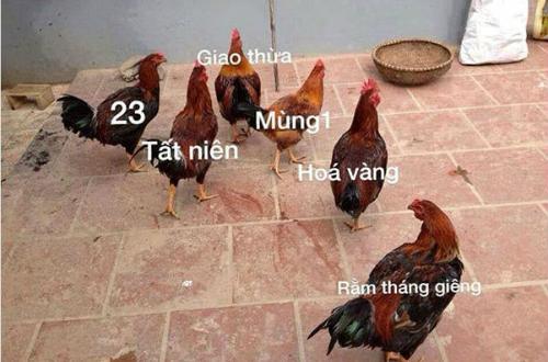 cuoi-te-ghe-28-1-ly-do-can-tim-gau-gap-trong-mua-dong-2