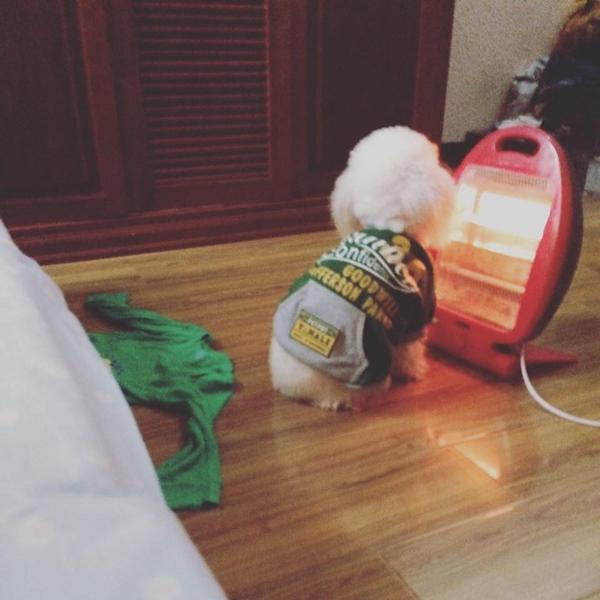 Áo chống rét, máy sưởi ấm bằng điện... tích cực được huy động để giúp các bé thú cưng còn
