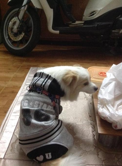 Một chú chó có trang phục giữ ấm được 'trưng dụng