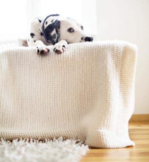 Làm sạch lông thú cưng dính trên đồ vật: Bạn đeo găng tay cao su, thấm ẩm nước rồi sờ vào các