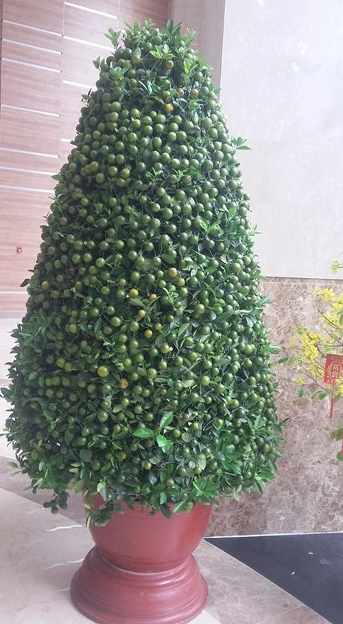 Một cây quất xanh óng khác