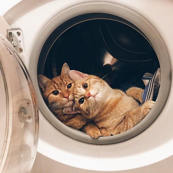 Hai chú mèo lớn lên và lập tức trở thành một đôi bạn thân thiết vì cùng sở hữu tính cách nghịch ngợm, hiếu động như nhau.