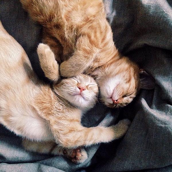 Cặp anh em nhà mèo này nay đã được 8 tháng