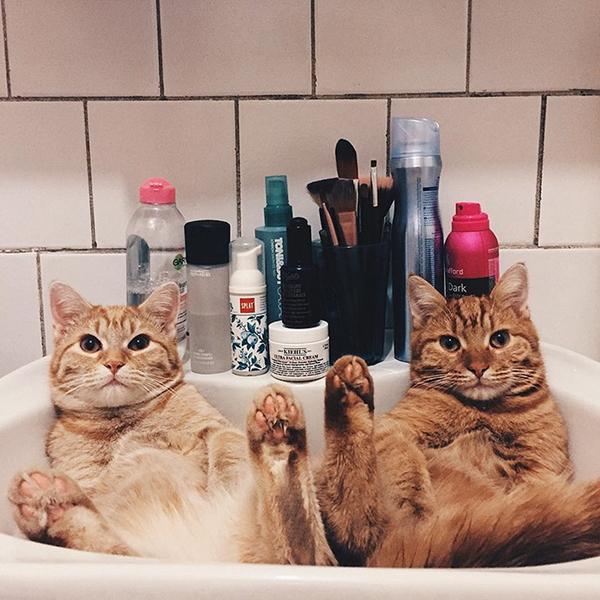 Những bức ảnh về vẻ đáng yêu của đôi mèo từng bị bỏ rơi khiến nhiều người mê thú cưng phải xuýt xoa.