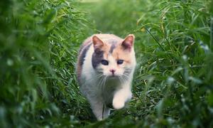 Nàng mèo mù mê du lịch hot nhất YouTube