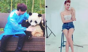 Sao Việt 9/3: Hồ Quang Hiếu 'sờ' bụng gấu panda, Kỳ Hân chỉnh chân kỳ quặc