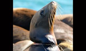 Loài vật gánh hậu quả của ô nhiễm môi trường