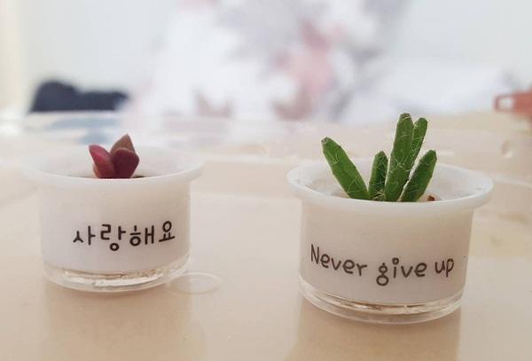 """Chậu cây xinh xinh mang những câu nói giản dị mà ý nghĩa như """"Cảm ơn"""", """"Tôi yêu   bạn"""", """"Cố lên"""", """"Bạn là đỉnh nhất"""". Đây chính là điểm đặc biệt khiến """"chậu cây cảm   xúc"""" nhanh chóng gây sốt trong giới trẻ Hàn."""