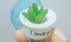 Giới trẻ Hàn 'phát sốt' với mốt trồng cây tí hon siêu kute