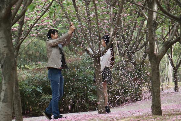 Cảnh tượng hoa rơi đẹp như ngôn tình này chắc chắn sẽ giúp cô gái có một bức   ảnh khiến nhiều người ghen tỵ.