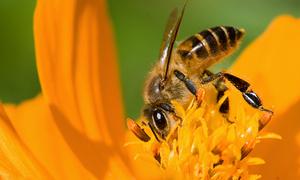 Nếu là ong, bạn sẽ chọn loài hoa nào để hút nhụy