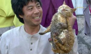 5 bộ phim Hàn bị chỉ trích vì ngược đãi động vật