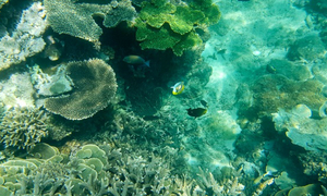 Chụp ảnh cực chất dưới nước