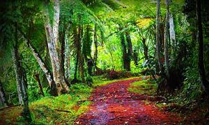 Con đường vào rừng hé lộ tâm tư của bạn