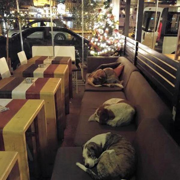 Mỗi ngày, sau khi tiễn người khách cuối cùng rời đi, người chủ hàng cà phê ở   Mytilene (Hy Lạp) lại mở cửa cho những chú chó lang thang có chỗ ngủ ấm áp và   an toàn.