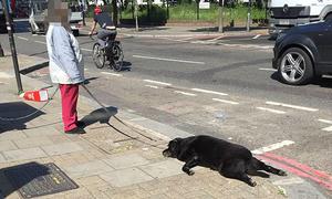 Chú chó đột tử bị chủ kéo lê xác trên đường gây phẫn nộ