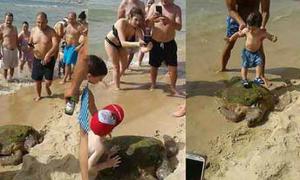 Đám đông hành hạ rùa biển quý hiếm để chụp ảnh, bỏ mặc cho chết