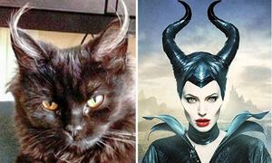Những chú mèo có ngoại hình giống hệt nhân vật phim nổi tiếng