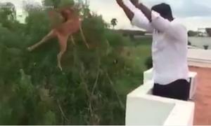 Chú chó bị ném từ nhà cao tầng xuống đất
