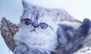 Chú mèo mắt trố xấu nổi tiếng Instagram