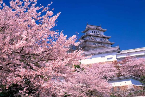 2. Năm học mới bắt đầu vào ngày 1/4 Trong khi hầu hết các trường học trên thế giới khai giảng vào tháng 9 hoặc tháng 10, ở Nhật Bản, tháng 4 mới là lúc bắt đầu một năm học mới. Ngày đầu tiên đi học thường trùng với mùa hoa anh đào nở. Một năm học được chia làm 3 kỳ: Từ 1/4 đến 20/7, 1/9 - 26/12, 7/1 - 25/3. Học sinh Nhật có 6 tuần nghỉ hè, 2 tuần nghỉ đông và xuân.