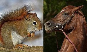 Quizz: Con vật nào sống thọ hơn?