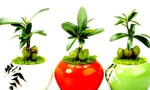 Để hút tiền tài, 12 con giáp nên trồng cây gì