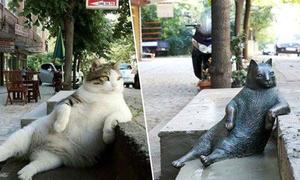Chú mèo béo 'phớt đời' được dựng tượng