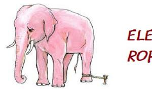 Truyện hay mỗi ngày: Bí mật không thể ngờ của người huấn luyện voi