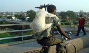 Những hình ảnh hài hước chỉ có ở Châu Phi