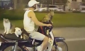 Người Việt chở mèo dạo phố lên chuyện lạ của báo Anh